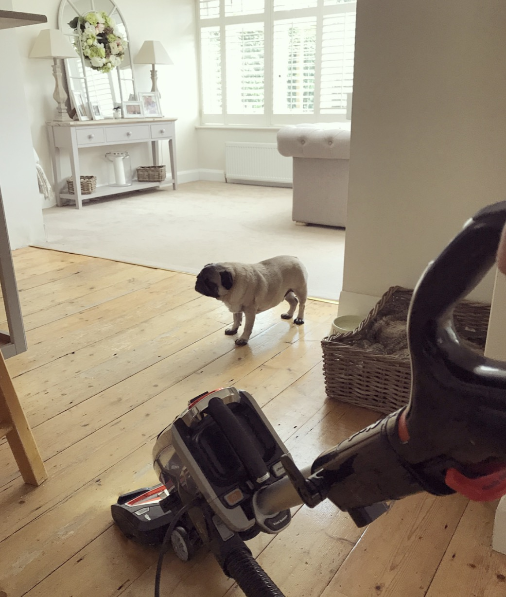 Tips For Keeping Your Home Clean With A Dog